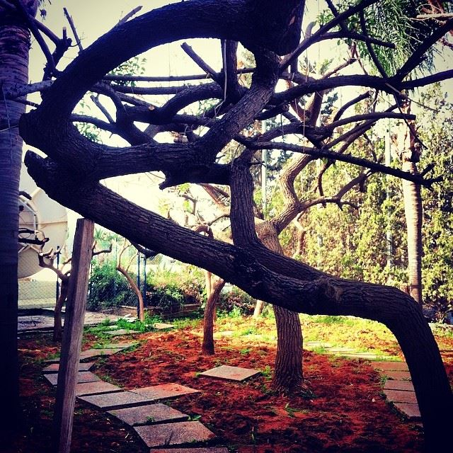 garden green nature tree beirut Lebanon...