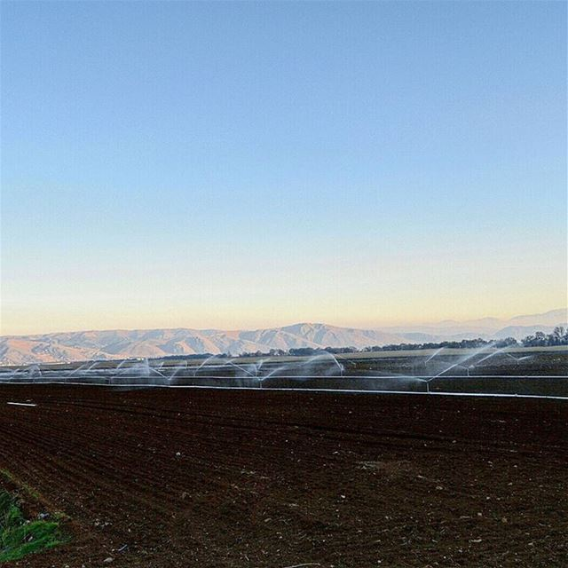 healthy agricultural land of bekaa😍 bekaavalley agriculture farm ...