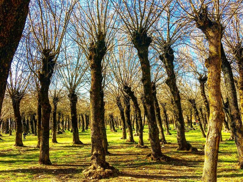 Beautiful place to get lost ✨🍃🍂 explorelebanon livelovezahleh ... (Taanayel- Bekaa)