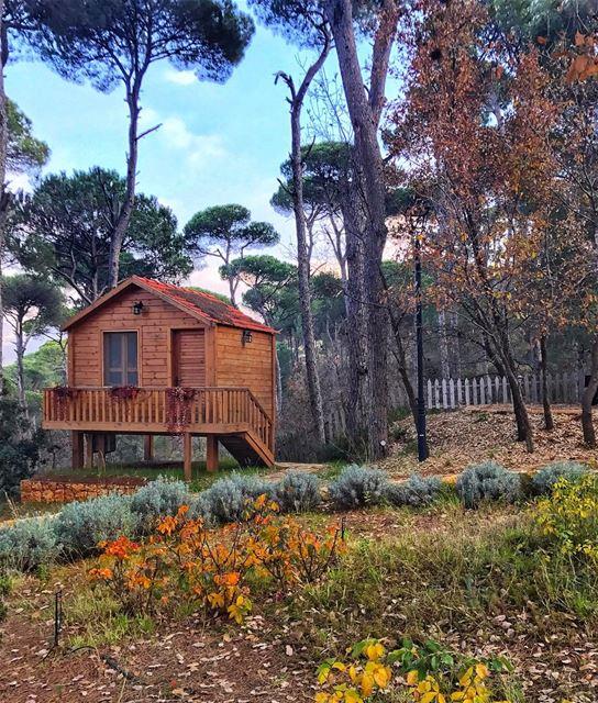 All you need is love & a little cabin 🍁🏡 ... (La Maison de la Forêt)