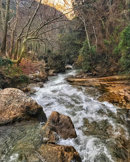 She lost herself in the trees among the ever changing leaves. She swept... (Bsatin Al-Ossi Waterfalls)