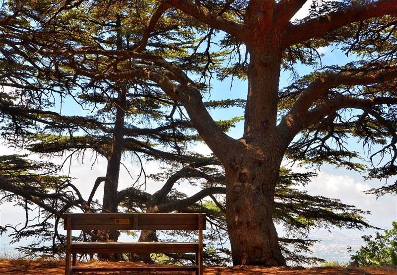 Out of suffering have emerged the strongest souls; the most massive... (Maaser El Shouf Cedars)