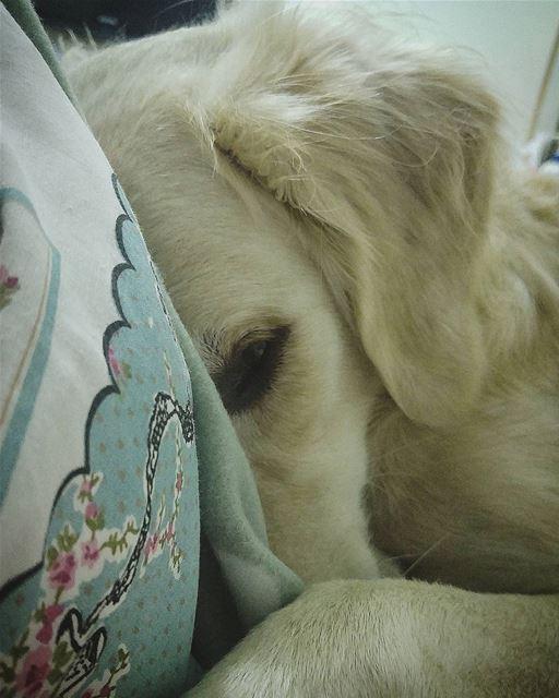 good night 💤 Woody hehasmyheart ♥ ilovemydog cuddles bedtime ...