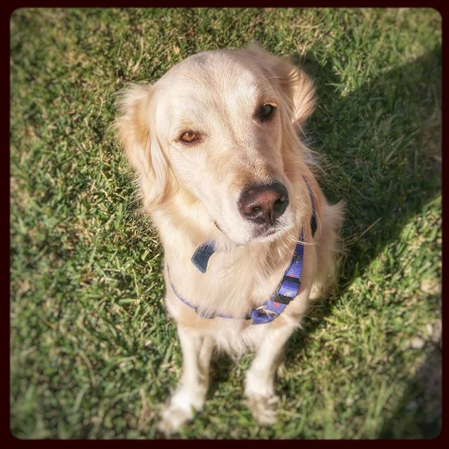 Morning ☀ 🐾 Woody hehasmyheart ♥ ilovemydog purelove ... (Marsē)