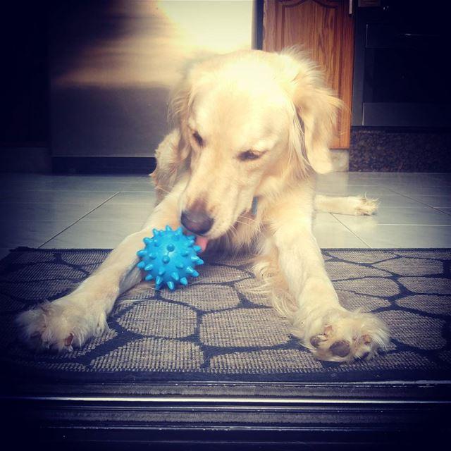 Woody's new toy ♡ Woody mytoy blue ilovemydog heartofgold ...