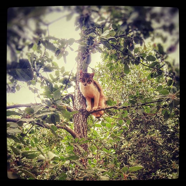 otta3alshajra stareatme kitty cat cats catonatree runforyourlife ... (Chehara - Jouret El Ballout)