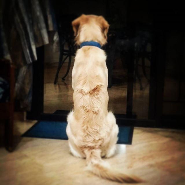 ♡ 🐾 Woody ilovemydog waitingforcarla mine happypet love ...