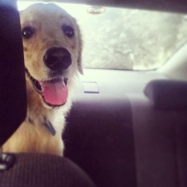 my favorite passenger ♡ 🐾 Woody hellooo ilovemydog cute eyes nose ...