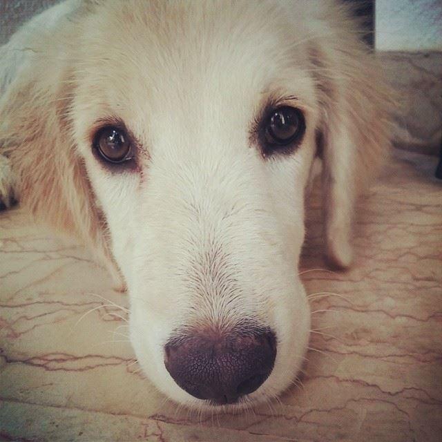 Bonbain shower dog nap sleepy beirut lebanon ...