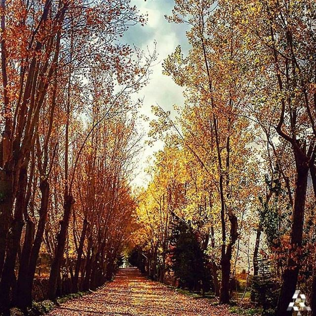 How about a walk in the woods 😄@wearelebanon fromtheeyesofalebanese ...