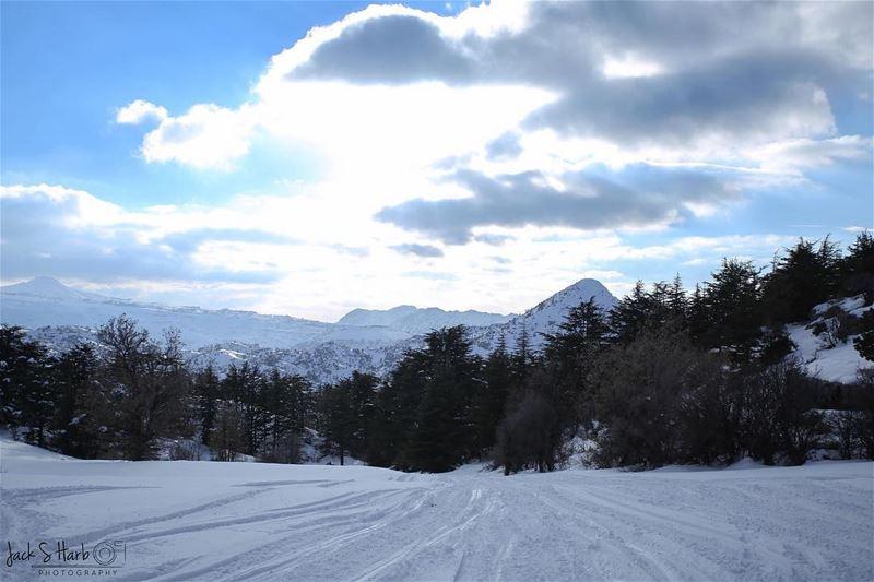 Take a drive through the snow. ❄️ lebanon beirut batroun ... (Tannourine Cedars Nature Reserve)