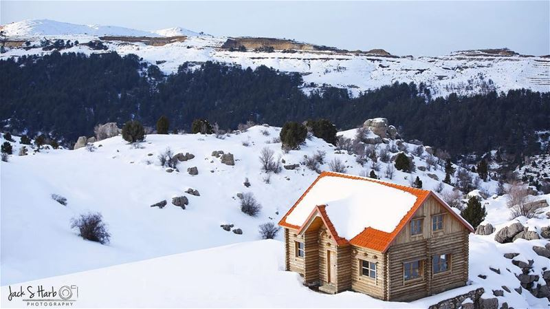 Winter is the time for comfort ,for good food and warmth ,for a touch... (Tannourine Cedars Nature Reserve)