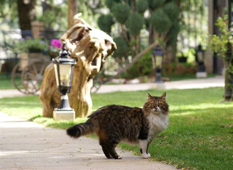Cats are connoisseurs of comfort. petstagram cute love catstagram... (Tannourine)