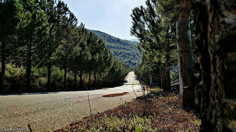 Nothing behing me everything ahead of me, as is ever so on the road. ... (Tannourine)
