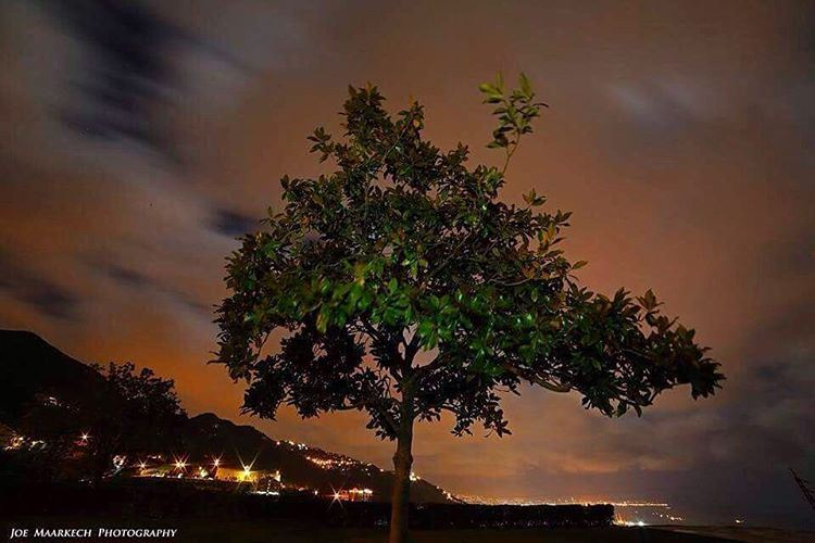 بيني وبينك ياهالّليل... night tree lonely sky clouds mountains ... (Ghazir, Mont-Liban, Lebanon)