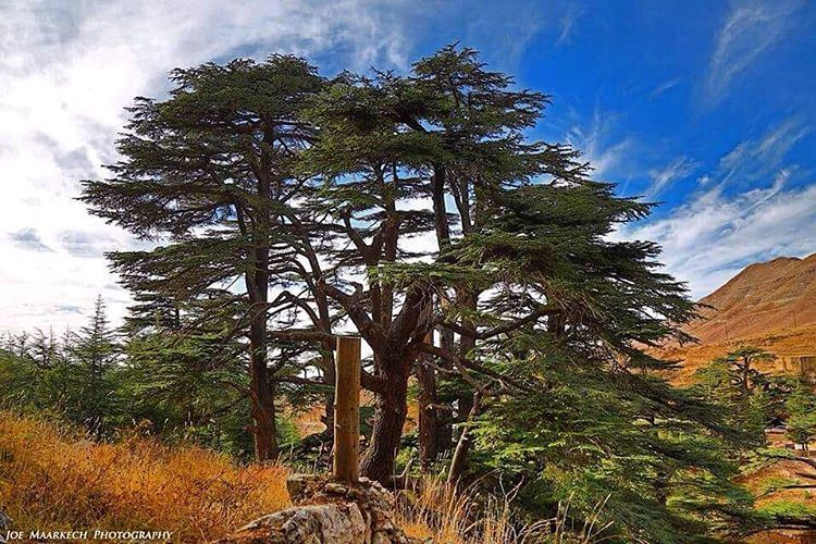 Out with the old, in with the new: may you be happy the whole year... (Cedars of God)