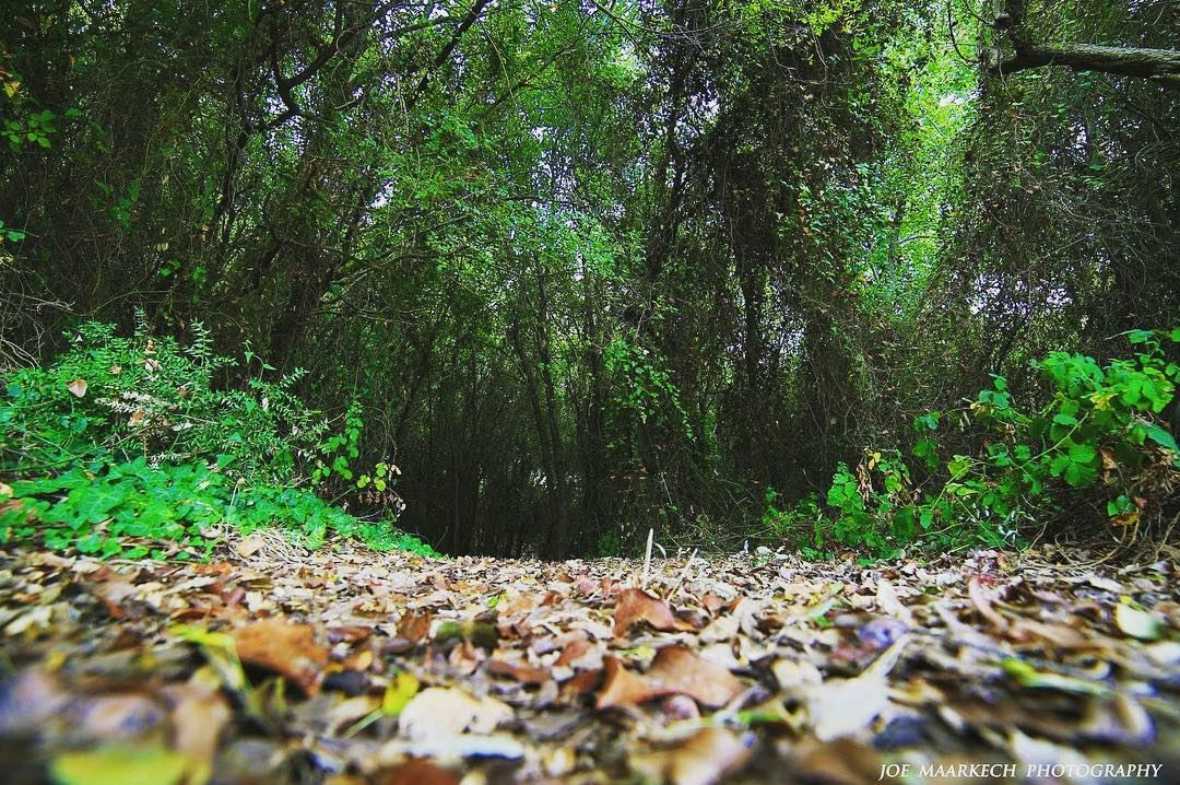 the fallen leaves in the forest seemed to make even the ground glow and...