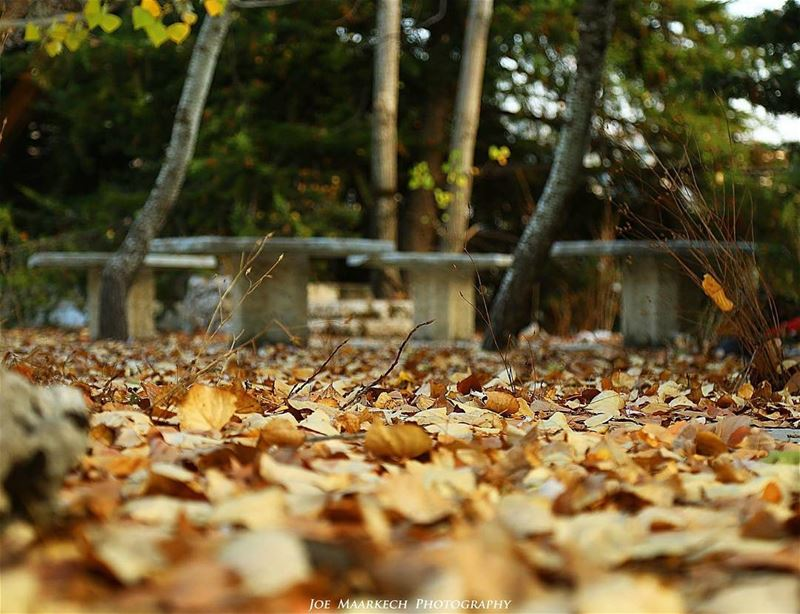Anyone who thinks fallen leaves are dead, has never watched them dancing...