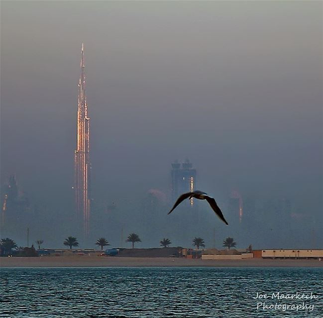 Sea, bird, sky and Burj Khalifa ( Khalifa Tower ). Dubai dubai dxb ... (The Palm Jumeirah Dubai UAE)