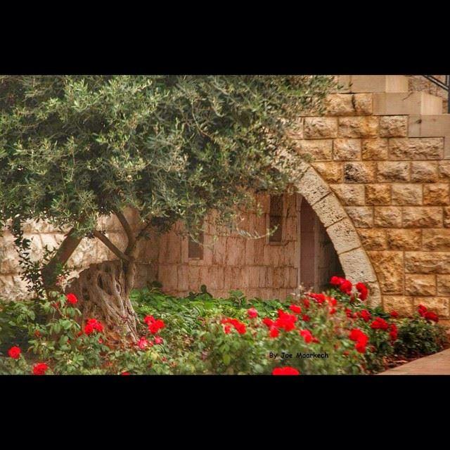 Mar Elias Church, Ghazir, Lebanon lebanon ghazir monastery tree ...