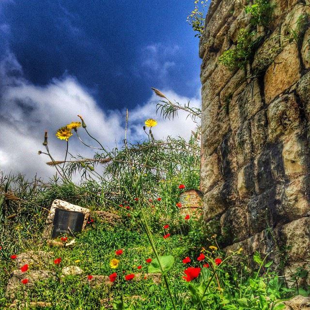 Morning! lebanon clouds flowers sky nature ghazir ...