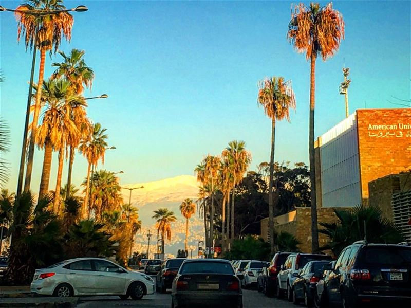 Those ain't the palms of Miami . Those are palm trees of manara ... (Beirut, Lebanon)
