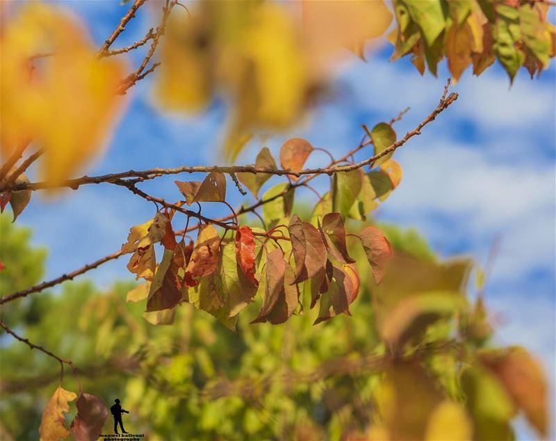 The magic colors of autumn.. fall🍁 colors autum🍁🍂 sky chouf...