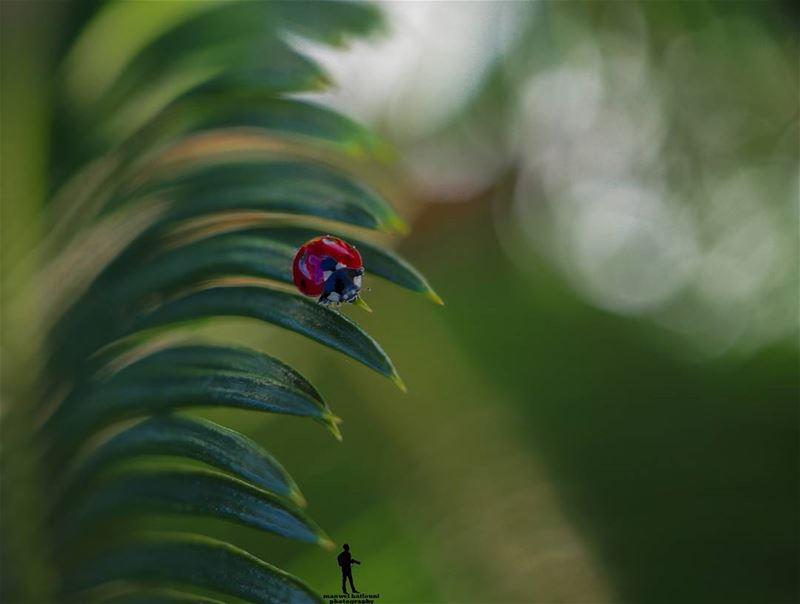 أم علي 😂 ladybug green red insectshot shottime canon...