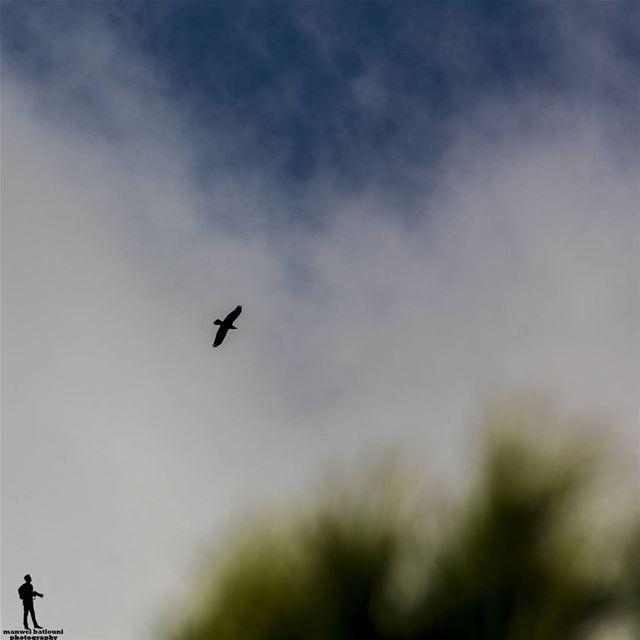 لو فينا نهرب ونطير... صباح الخير goodmorning bird sky chouf jbaa...