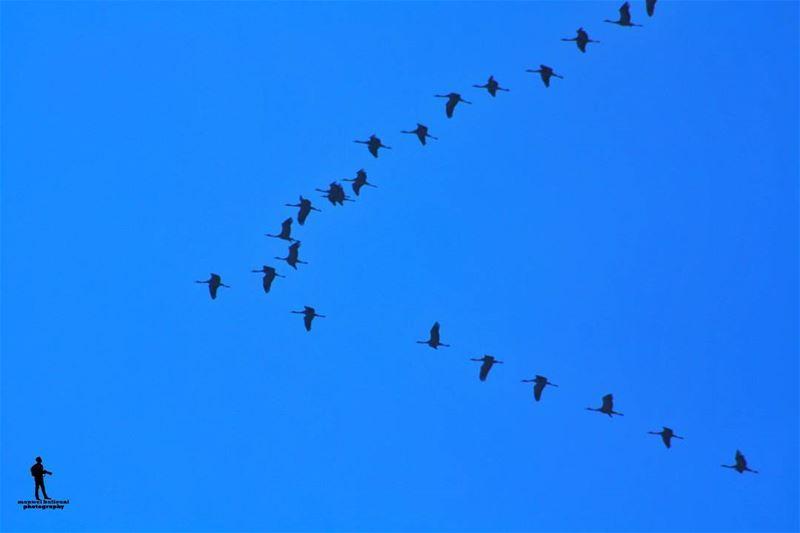 Good morning morning birds travelingbirds shoufreserve ...