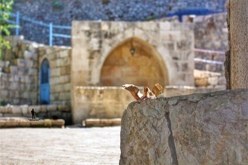 Welcome autumn... autum🍁🍂 villege water jbaa chouf Lebanon ...