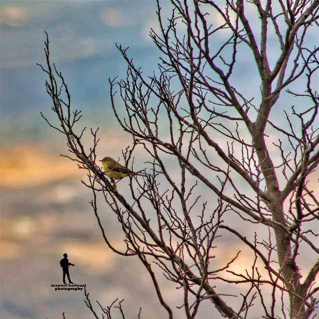 nature bird  fall yellowleaves  livelovenature  naturelover ...