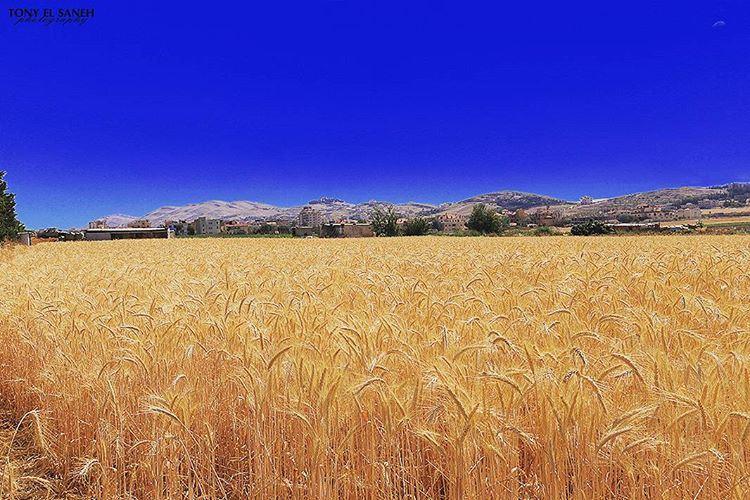 landscape landscape_lovers photooftheday photographysouls ... (`Anjar, Béqaa, Lebanon)