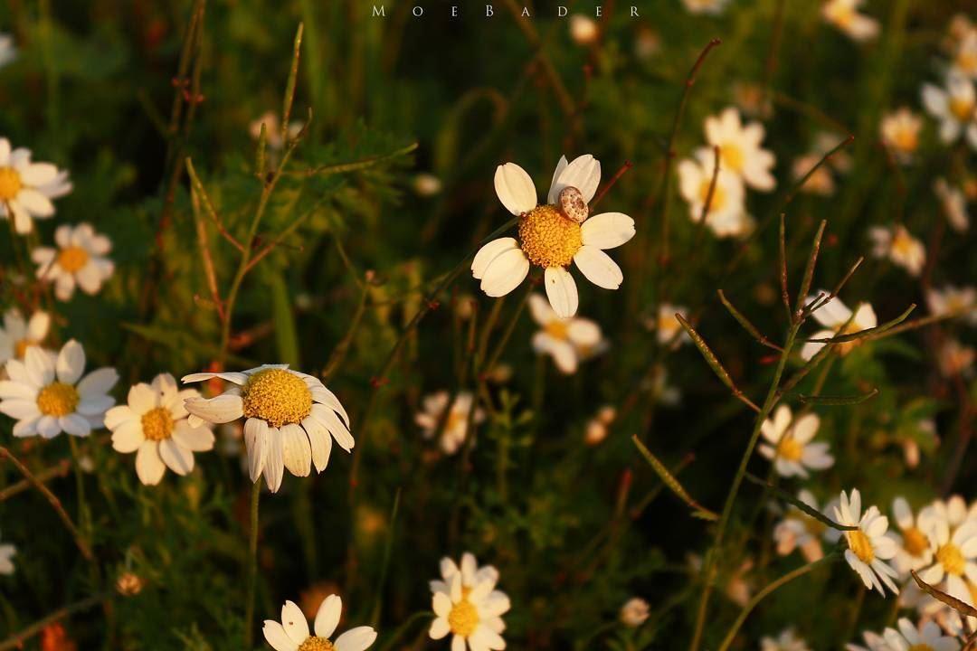 • 🌼 • photooftheday landescape phototime livelovetyre mornig ...
