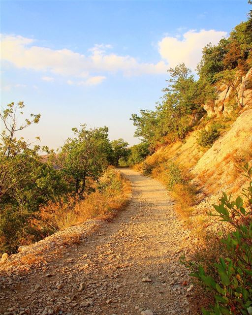 Getting lost here is in the right direction.. road mountain reserve ... (La Reserve Horsh Ehden)