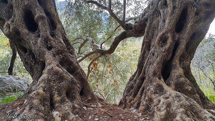 Happy palm sunday🌞🍃. tannourine lebanon wearetannourine ... (Tannourine)
