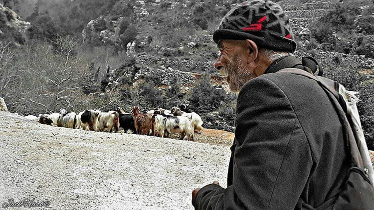 I am not afraid of an army of lions led by a sheep, i am afraid of an... (Tannourine)