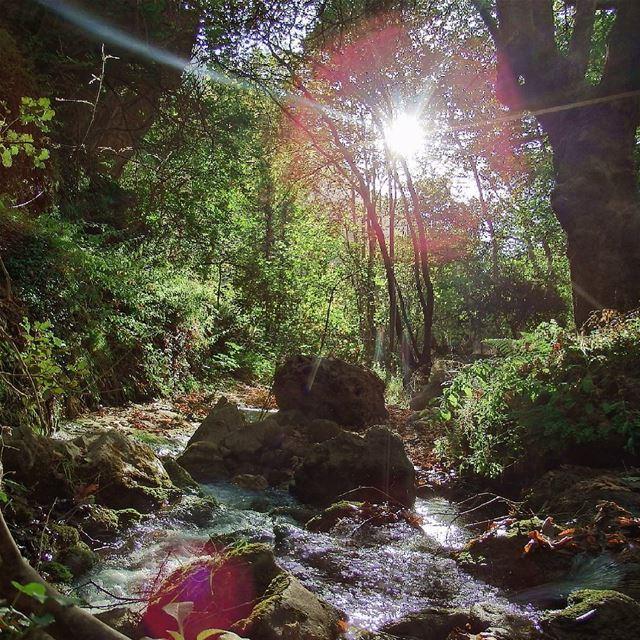 Touch of nature. insta_lebanon ig_lebanon proudlylebanese ... (Tannourine El Tahta)