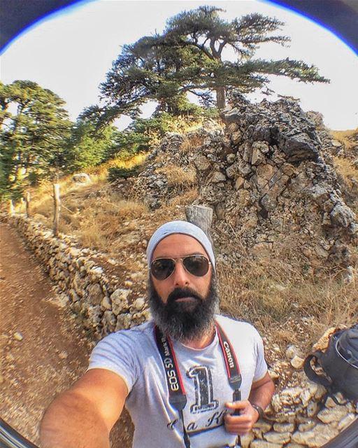 Hello from Cedars Of God!!🇱🇧❤️ cedars cedarsoflebanon cedarsofgod ... (Cedars of God)