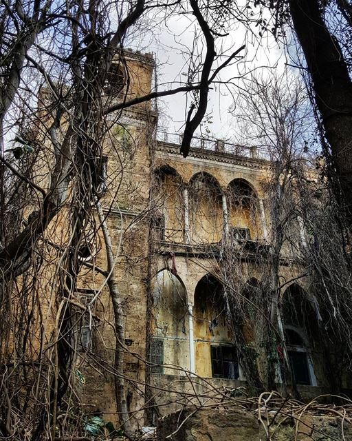 Abandoned..Only Old trees live here..🕸 oldhouse  runningphotos ... (Beirut, Lebanon)