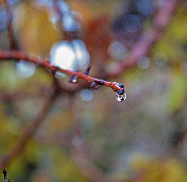 Cold days-warm hearts cold winter rainydays chouf jbaa lebanon...