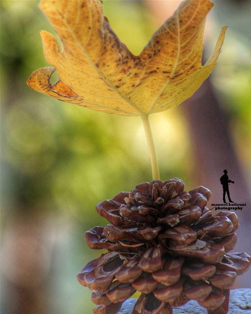 ...رجعت الشتوية.... fall winter chouf jbaa lebanon lebanonbyalocal ...