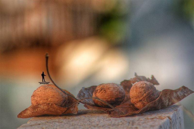 Hello October nut october fall greattimes greatdays shots Lebanon...