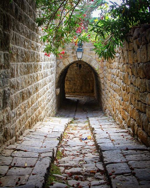 A walk I remember........... walk authentic beautiful plants ... (Lebanon)