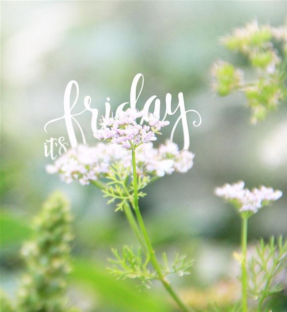 Finally! friday summer weekend tgif flower blurry green nature ...