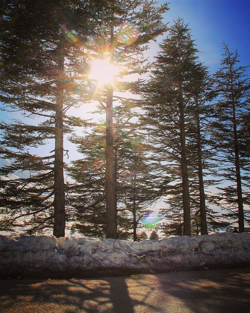 For the love of the sun. sun sunlover light hope beautiful warm ... (Cedars Of Lebanon)