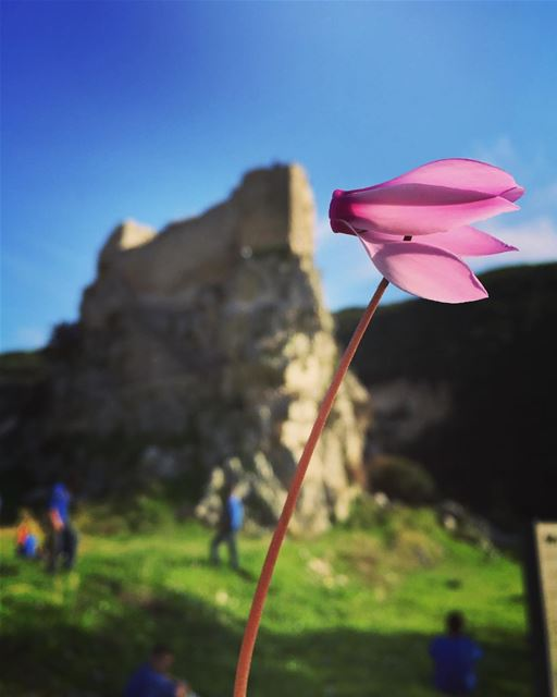 Rise and shine ☀️ flower castle fort msaylha green rock therock ... (Mussaylha Crusader Fortress)
