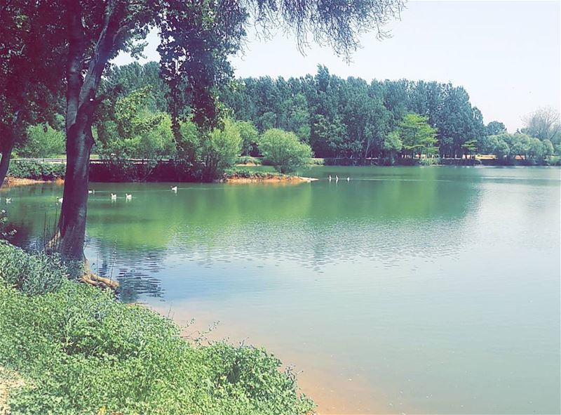 Look Deep Into Nature , and then You Will Understand everything better 🌳🍃 (Taanayel Lake)