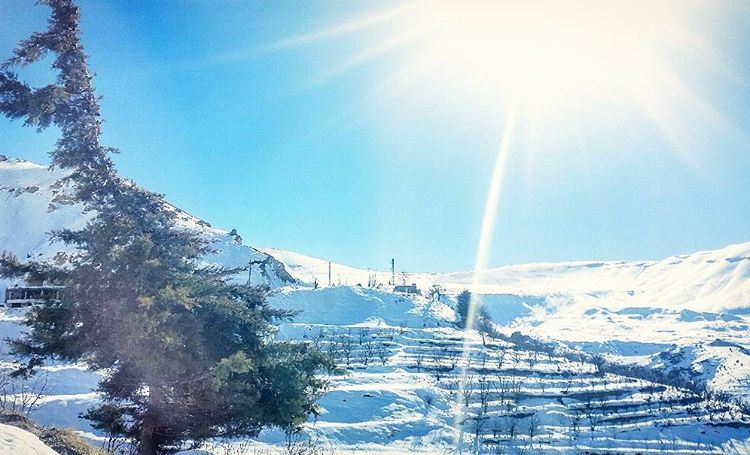 snow winter vibes dayaddict sun trees white mountains ... (Cedars of God)