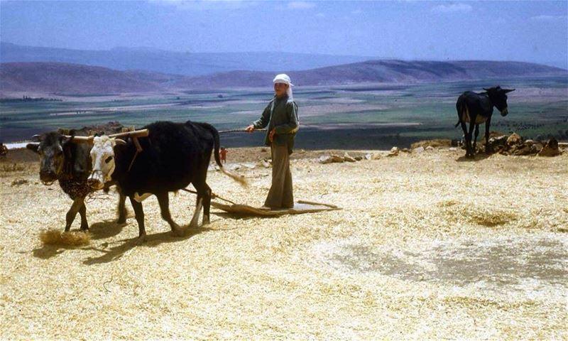 البقاع عام ١٩٦٨ ،Bekaa in 1968